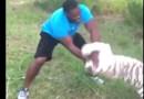 Rashad Evans vs Tiger